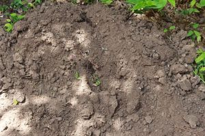 Dirt_and_Mud_002_-_Loose_Dirt_with_Plants