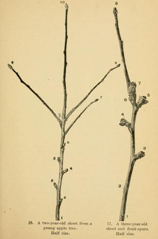 the_pruning-book3b_a_monograph_of_the_pruning_and_training_of_plants_as_applied_to_american_conditions_28190329_281458118942929